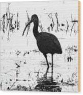 Ibis Pintail Drive Cameron Prairie Nwr Wood Print