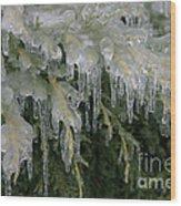 Ice-coated Arborvitae Wood Print