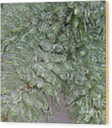 Ice-coated Norway Spruce Wood Print