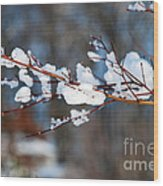 Ice On A Branch Wood Print