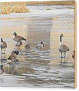 Ice Skating Geese Wood Print