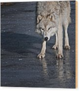 Ice Wolf Wood Print