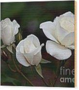 Iceberg Roses Wood Print