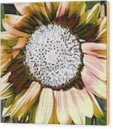Iced Oatmeal Cookie Sunflower Wood Print by Devalyn Marshall
