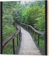 Ichetucknee Forest Pathway Wood Print