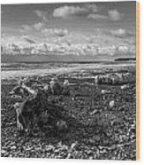 Icy Alaskan Beach Wood Print