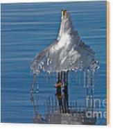 Icy Blue Twist Wood Print