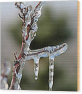 Icy Branch-7529 Wood Print