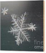 Icy Wood Print