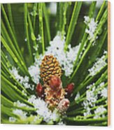 Icy Pine 1 Wood Print