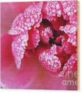 Icy Rose Wood Print