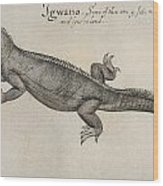 Iguana, 1585 Wood Print