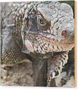 Iguana At Magens Bay Wood Print