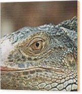 Iguana (iguana Iguana) Wood Print