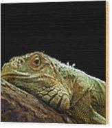 Iguana Wood Print by Jane Rix