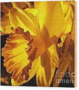 Illuminated Daffodil Photograph Wood Print