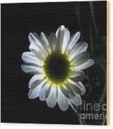 Illuminated Daisy Photograph Wood Print
