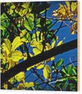 Illuminated Elm Leaves Wood Print