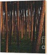 Illuminated Forest Wood Print