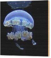 Illuminated Jellyfish  Wood Print