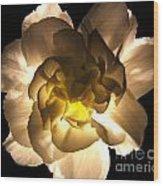 Illuminated White Carnation Photograph Wood Print