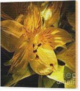 Illuminated Yellow Alstromeria Photograph Wood Print
