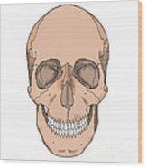 Illustration Of Anterior Skull Wood Print