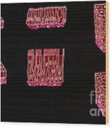 Illustration Of Epithelium Types Wood Print
