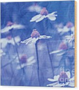 Imagine 06ht01 Wood Print
