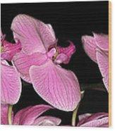 Img8383 Wood Print