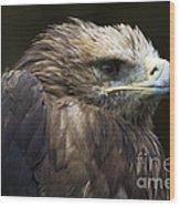 Imperial Eagle 4 Wood Print