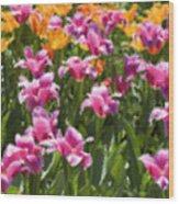 Impressionist Tulips In A Field Wood Print