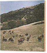 In A Pasture Near Pleasanton Hereford Wood Print