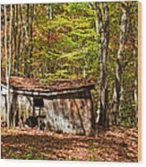 In Autumn Woods Wood Print by Steve Harrington