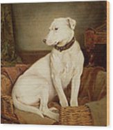 In Disgrace Wood Print by William Woodhouse