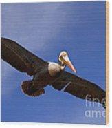 In Flight Pelican Wood Print