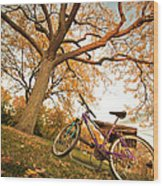In Search Of Fall Colors Wood Print