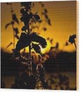 In Sunset's Glow Wood Print