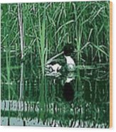 in the Bulrushes Wood Print