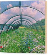 In The Greenhouse Wood Print
