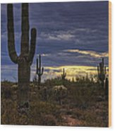 In The Shadow Of The Saguaro  Wood Print