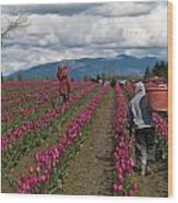 In The Tulip Fields Wood Print