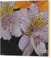 Inca Lily Wood Print