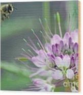 Incoming Bee Wood Print