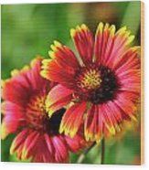 Indian Blanket Wood Print