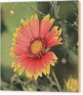 Indian Blanket Flower Wood Print