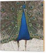 Indian Blue Wood Print
