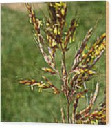 Indian Grass Seed Wood Print