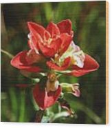 Indian Paintbrush Wood Print