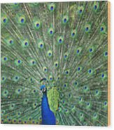 Indian Peafowl Pavo Cristatus Male Wood Print